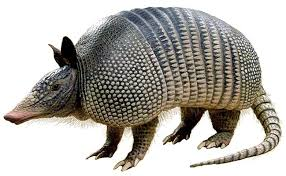 The Armadillo and the Missionary position….