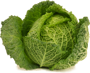 Let`s talk about Cabbages…..