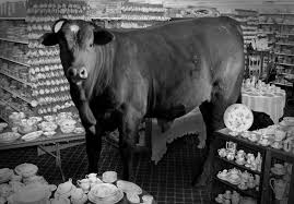Bull in a china shop….