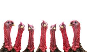 Why do we call a turkey, a turkey?….
