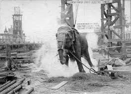 Thomas Edison the Elephant killer………..