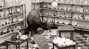 A bull in a china shop……